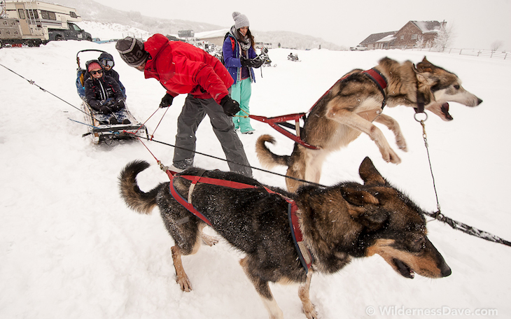 Omnigames dog sled
